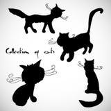 Inzameling van vier katten Royalty-vrije Stock Afbeeldingen