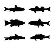 Inzameling van vissensilhouet Stock Afbeelding