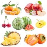Inzameling van vruchten stock afbeelding