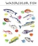 Inzameling van waterverfhand getrokken ondertekende vissen Stock Foto