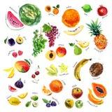 Inzameling van waterverfhand getrokken vruchten en bessen op witte achtergrond Stock Foto's