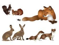 Inzameling van wilde zoogdieren. Stock Afbeelding