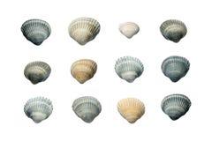 Inzameling van zeeschelpen op witte achtergrond wordt ge?soleerd die royalty-vrije stock foto's