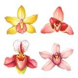Inzamelingsorchideeën op een witte achtergrond Schets in alcohol wordt gedaan die Royalty-vrije Stock Foto's