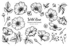 Inzamelingsreeks wilde roze bloem en bladeren die illustratie trekken stock illustratie