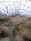 Inzicht in het verlaten tuinieren Stock Afbeelding