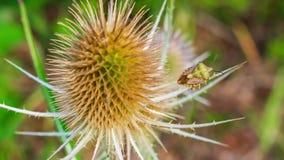Inzoomen op een wilde kaart met een insect stock footage