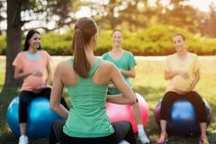 Ioga da gravidez Três mulheres gravidas na ioga no parque Fazem os exercícios com o treinador Fotografia de Stock Royalty Free