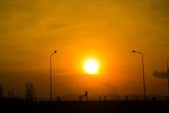 Ioga da mulher no por do sol Fotografia de Stock