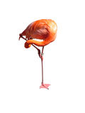Ioga do flamingo Foto de Stock Royalty Free