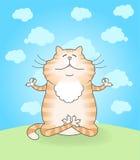 Ioga praticando do gato Fotos de Stock