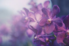 Iolet orchid in the farm. Filter:cross process vintage effect. Stock Image