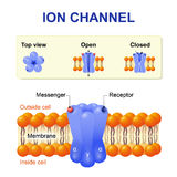 Ion channel Royalty Free Stock Photo