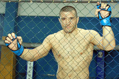 Ion Pascu, Romanian UFC Fighter Royalty Free Stock Image