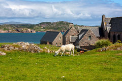 Iona Abbey, Scotland Stock Image