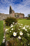 Iona Nunnery Ruins. On the Isle of Iona in the Inner Hebrides on the West Coast of Scotland. This Augustinian nunnery was founded around 1200 royalty free stock photography