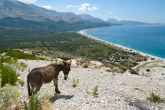 Ionian Coast Of Albania Stock Photography