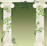 Ionic and Doric architectural order. Two Ionic columns entwined with ivy Stock Photo