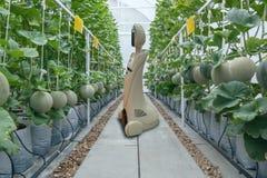 Iot intelligente Landwirtschaft, Landwirtschaft in Industrie 4 0 Technologiekonzept, Tendenzroboter mit im Bauernhof, Landwirt zu lizenzfreie stockfotos