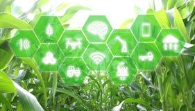 Iot, Internet de cosas, concepto de la agricultura, uso robótico elegante del ai de la inteligencia artificial para la gestión, c imagenes de archivo