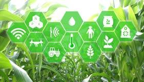 Iot, internet rzeczy, rolnictwa pojęcie, Mądrze Mechaniczny sztucznego intelligence/ai use dla zarządzania, kontrola, monitorin royalty ilustracja