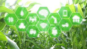 Iot, internet of things, agriculture concept, Smart Robotic artificial intelligence/ ai use for management , control , monitorin. G, and detect with the sensor Vector Illustration