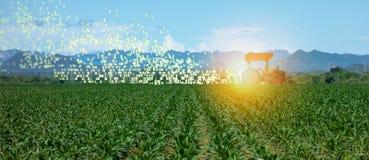 Iot mądrze uprawiać ziemię, rolnictwo w przemysle 4 (0) technologii z sztucznej inteligenci i maszynowego uczenie pojęciem ja pom obraz stock