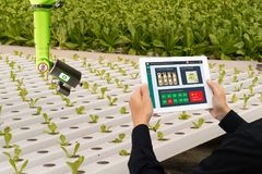 Iot smart industry robot 4.0 agriculture concept,industrial agronomist,farmer using software Artificial intelligence technology in royalty free stock image