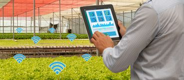 Iot smart industry robot 4.0 agriculture concept,industrial agronomist,farmer using tablet to monitor, control the condition in ve. Rtical or indoor farm ,the stock photo