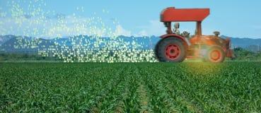 Iot smart lantbruk, jordbruk i bransch 4 0 teknologi med begrepp f?r konstgjord intelligens och f?r l?ra f?r maskin det hj?lper t royaltyfria bilder