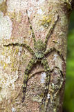 γιγαντιαία πράσινη αράχνη β&iota Στοκ φωτογραφία με δικαίωμα ελεύθερης χρήσης