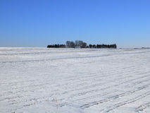 Iowa. Corn field under a blanket of snow stock photo