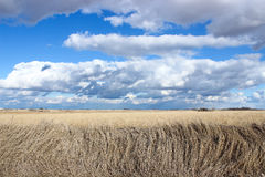 Iowa Clouds. A beautiful vibrant cloudscape in Iowa overlooking a field royalty free stock image