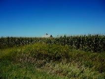 Iowa Corn Fields. With barn on a warm summer day Stock Image