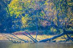 Iowa fall colors. A beautiful spectrum of fall foliage in Davenport Iowa stock images