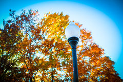 Iowa fall colors. A beautiful spectrum of fall foliage in Davenport Iowa stock image