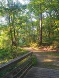 Iowa Forest Path fotos de archivo