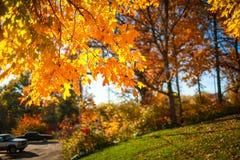 Iowa nedgångfärger Royaltyfria Bilder