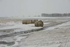 Iowa Winter. Taken while the blowing snow covered the corn filed stock images