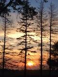 Iowan słońca położenie na polu uprawnym Przez drzew Obraz Stock