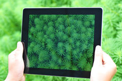 Ipad 4 grass Stock Image