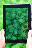 Ipad 4 shooting grass Stock Photos
