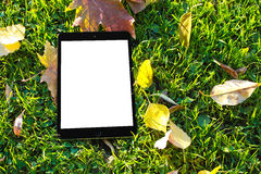 Ipad on green grass. Black Ipad with white screen on green grass surrounded by fallen leaves Stock Photos