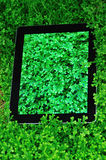 Ipad on green selaginella uncinata Royalty Free Stock Images