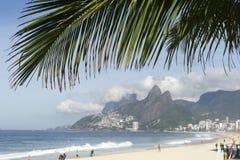 Ipanema海滩里约热内卢巴西棕榈叶状体 库存图片