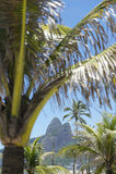 Ipanema Beach Rio de Janeiro Brazil Palm Trees Stock Images