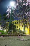 Ipe-Baum in Praça DA Liberdade (Liberty Square) Lizenzfreie Stockfotografie