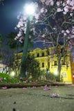 Ipe-träd i Praça da Liberdade (Liberty Square) Royaltyfri Fotografi