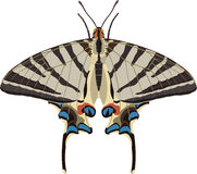 iphiclidespodalirius Royaltyfri Bild