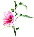 Ipomea blommar illustrationen Arkivfoto